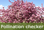 Pollination checking tool